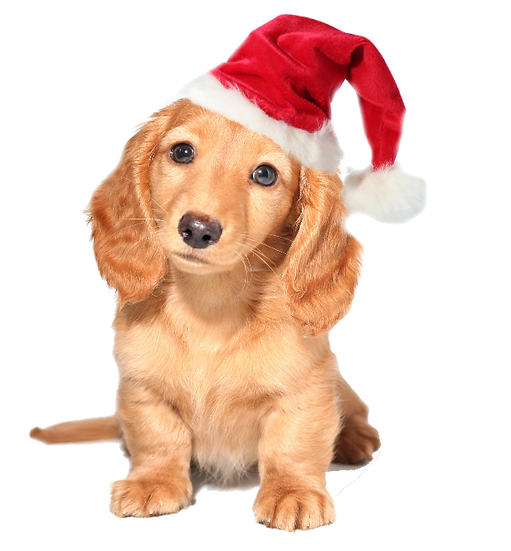 Christmas Puppy Free PNG Images - Free Digital Image Download