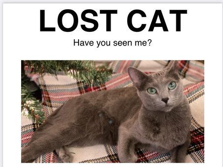 Missing Cat Found Owner