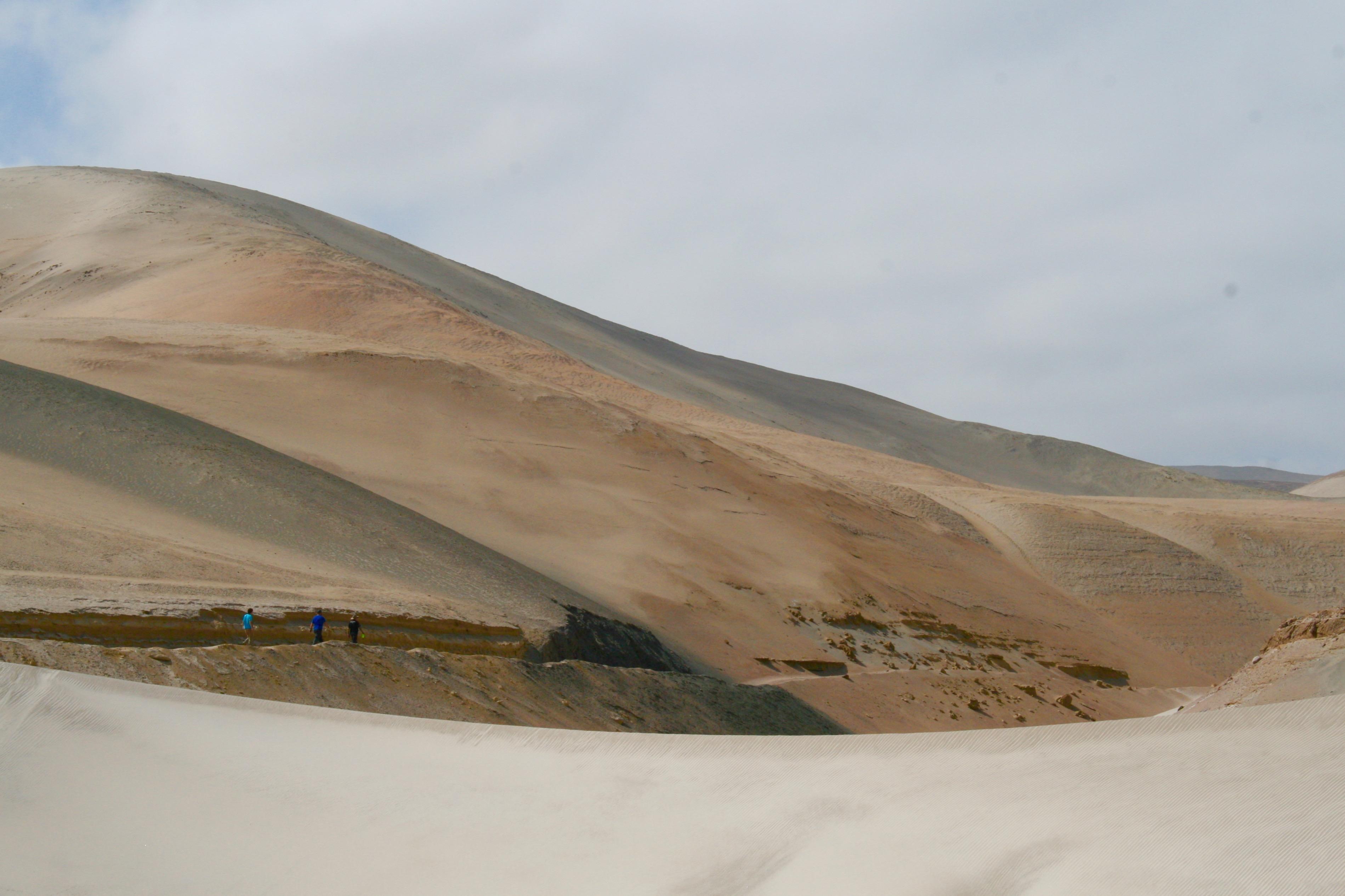 Dune Survey