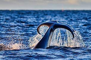 whale 6.jpg