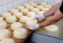 גבינות צאן ועיזים