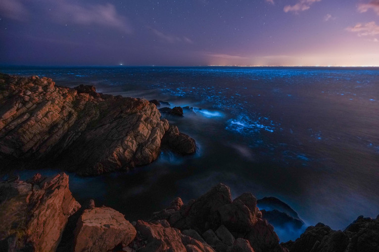 Gordonsbay Bioluminescence