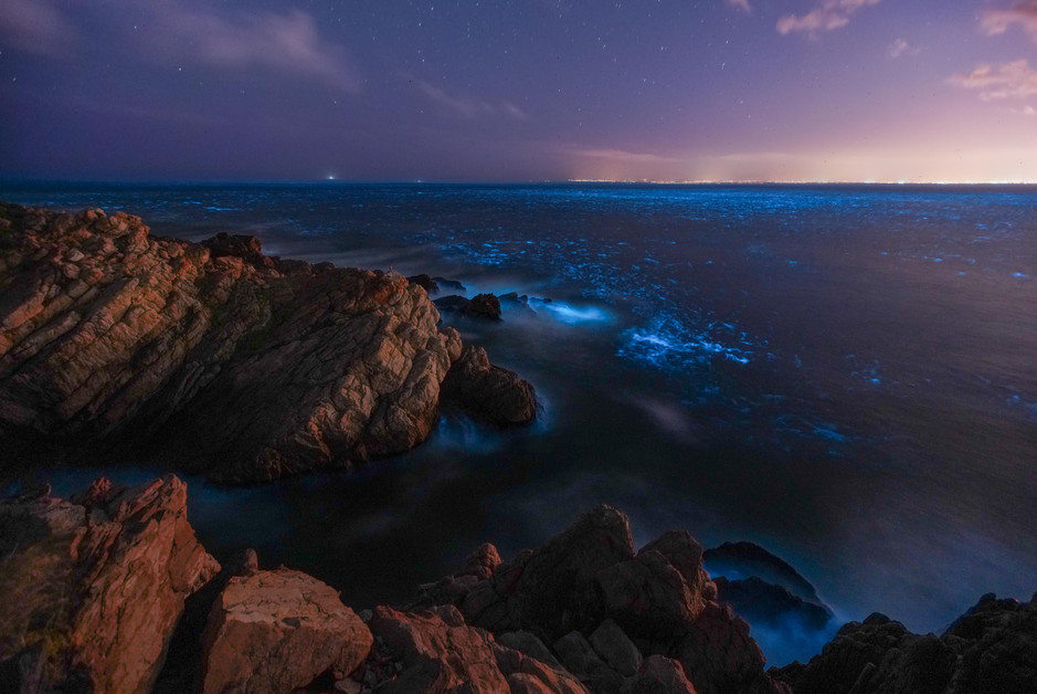 Gordonsbay Bioluminescence