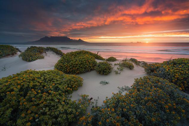 Blouberg Beach Flowers