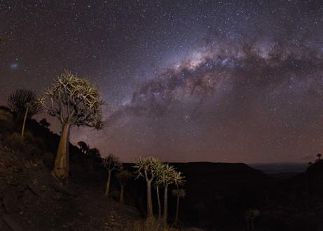Quiver Tree Panorama