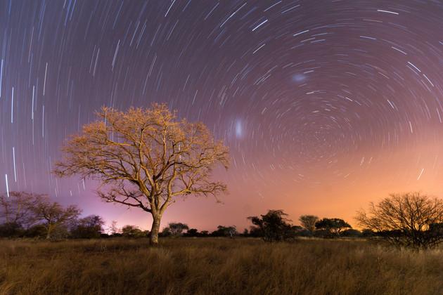 African Bush Startrail