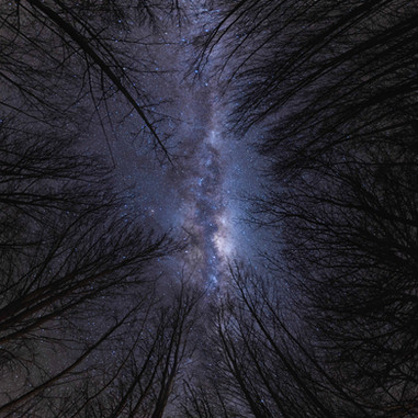 Starry Forest