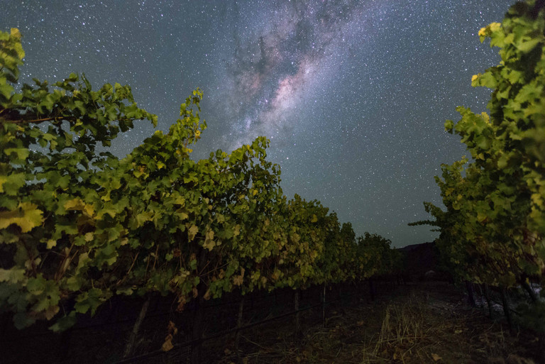Vineyard at Night