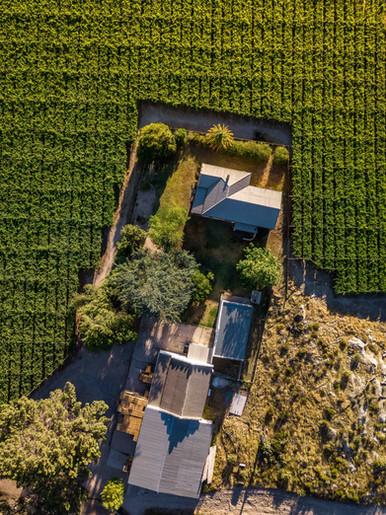Grape Farm House