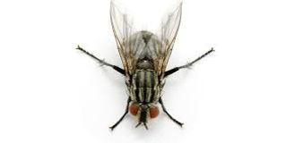 cluster-fly.jpg