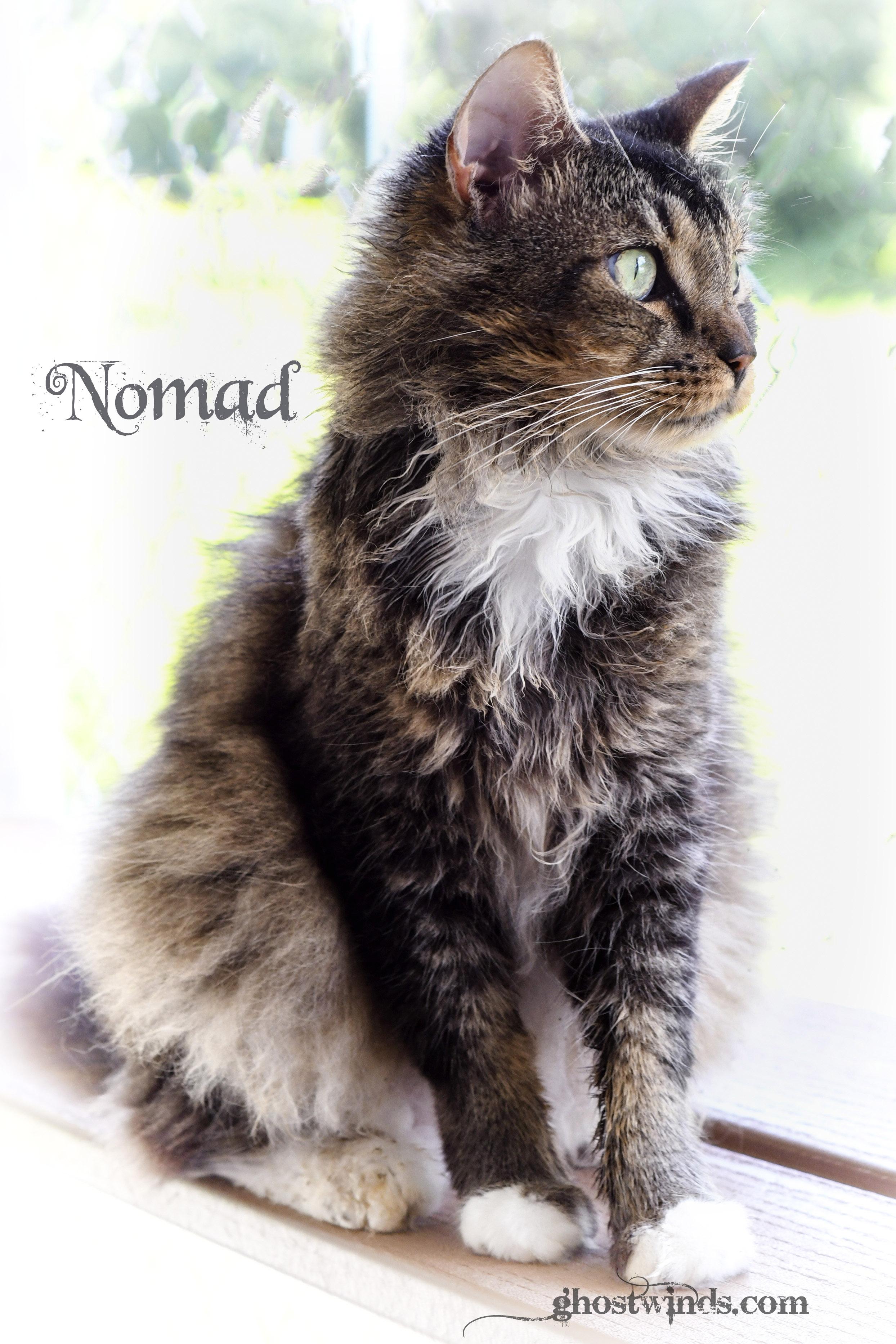 NomadDSC_3480