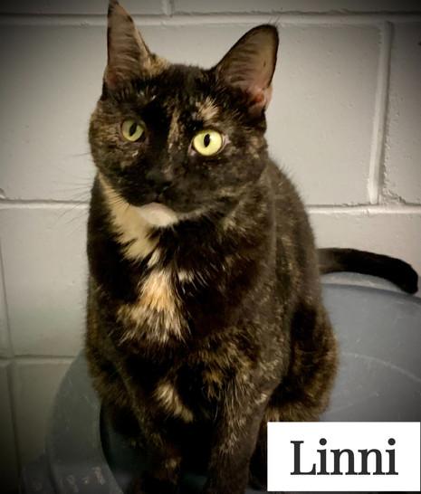 Linny%20(2)_edited.jpg