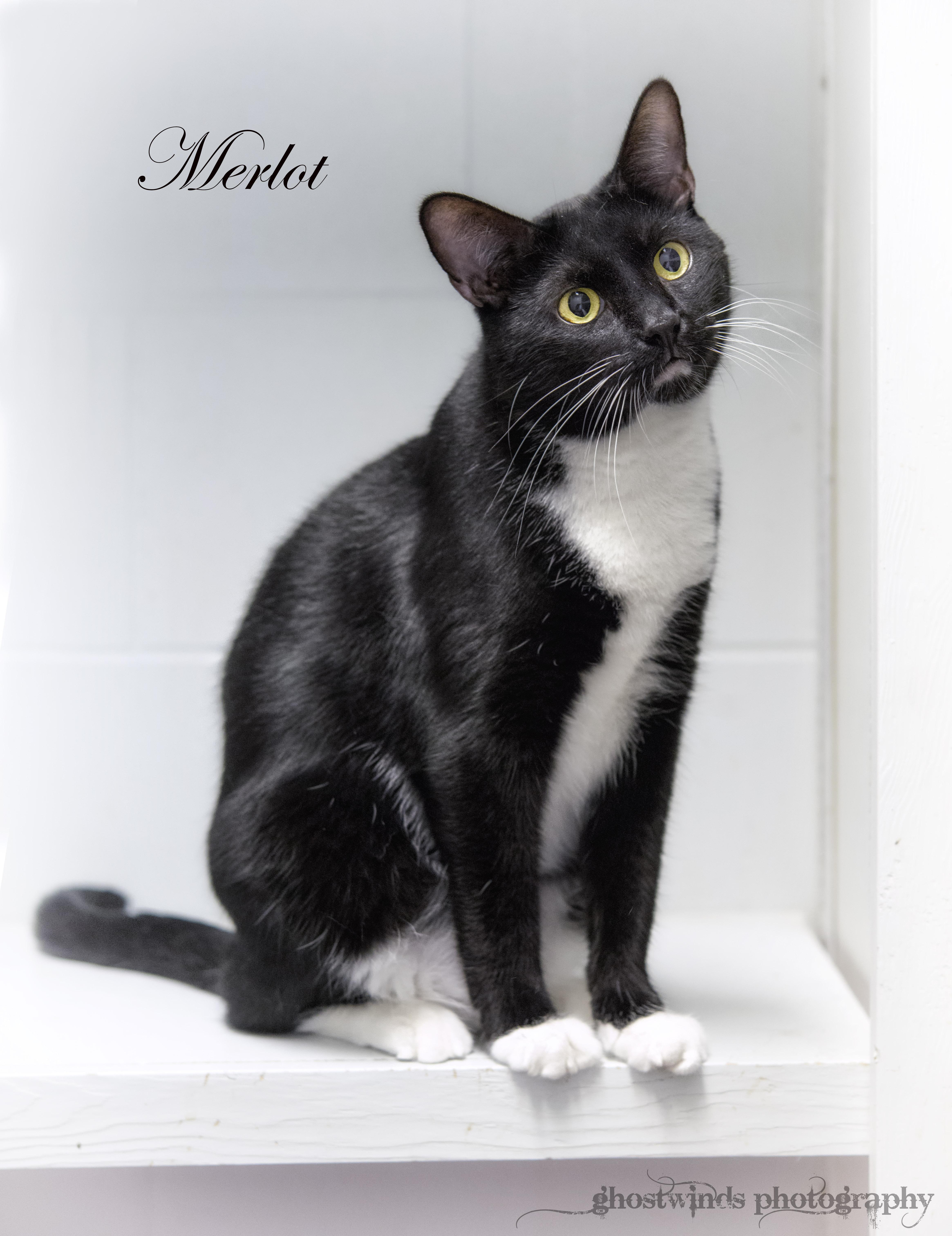 merlot0482