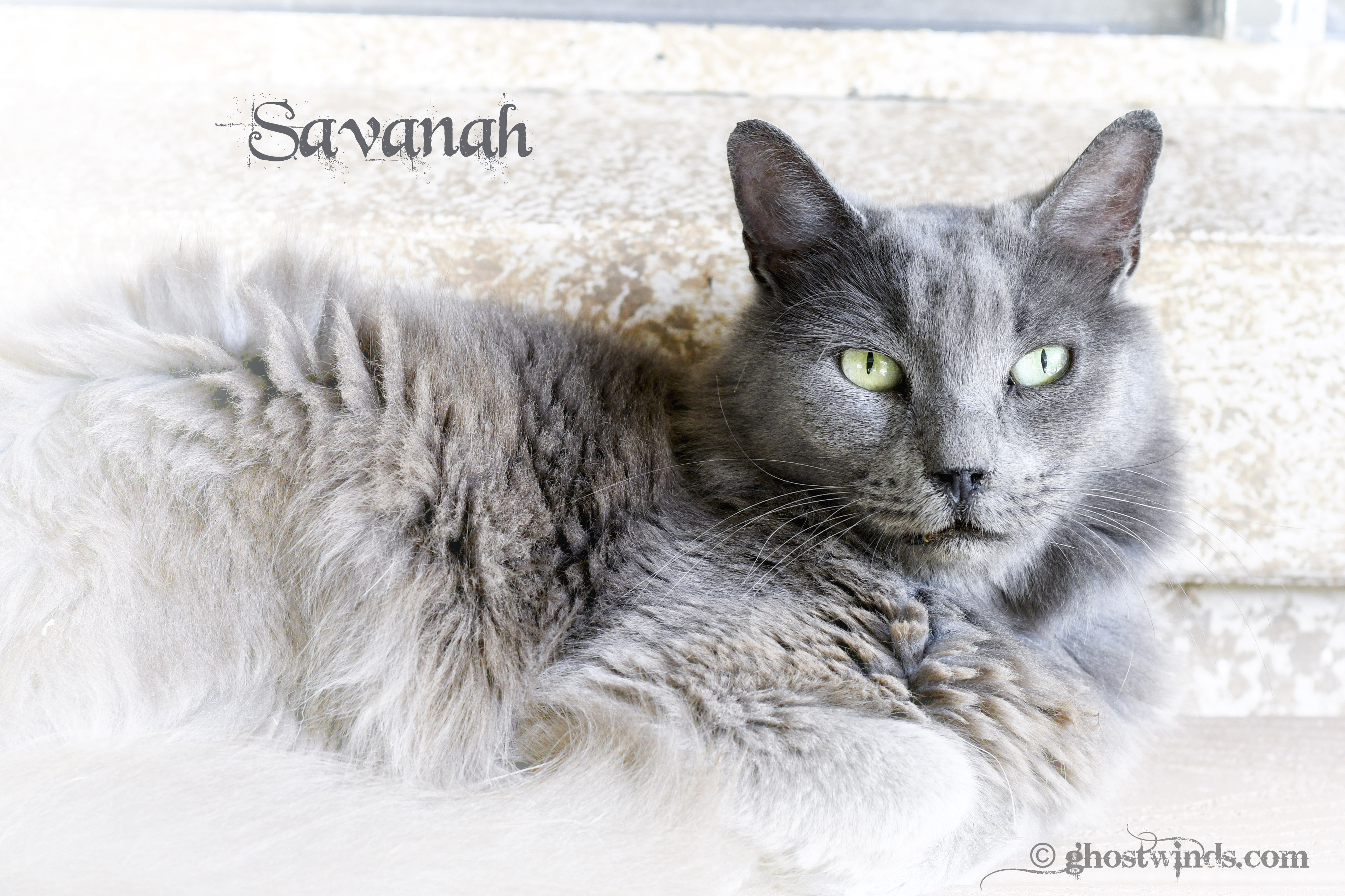 SavanahDSC_3488