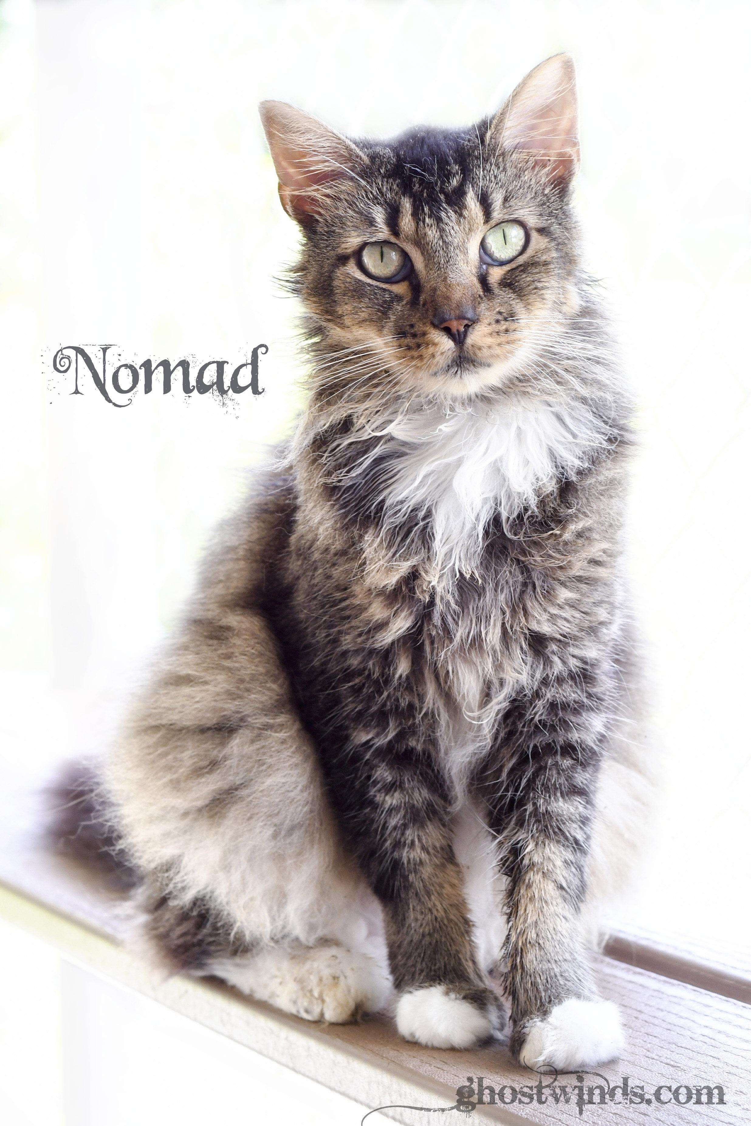 NomadDSC_3481