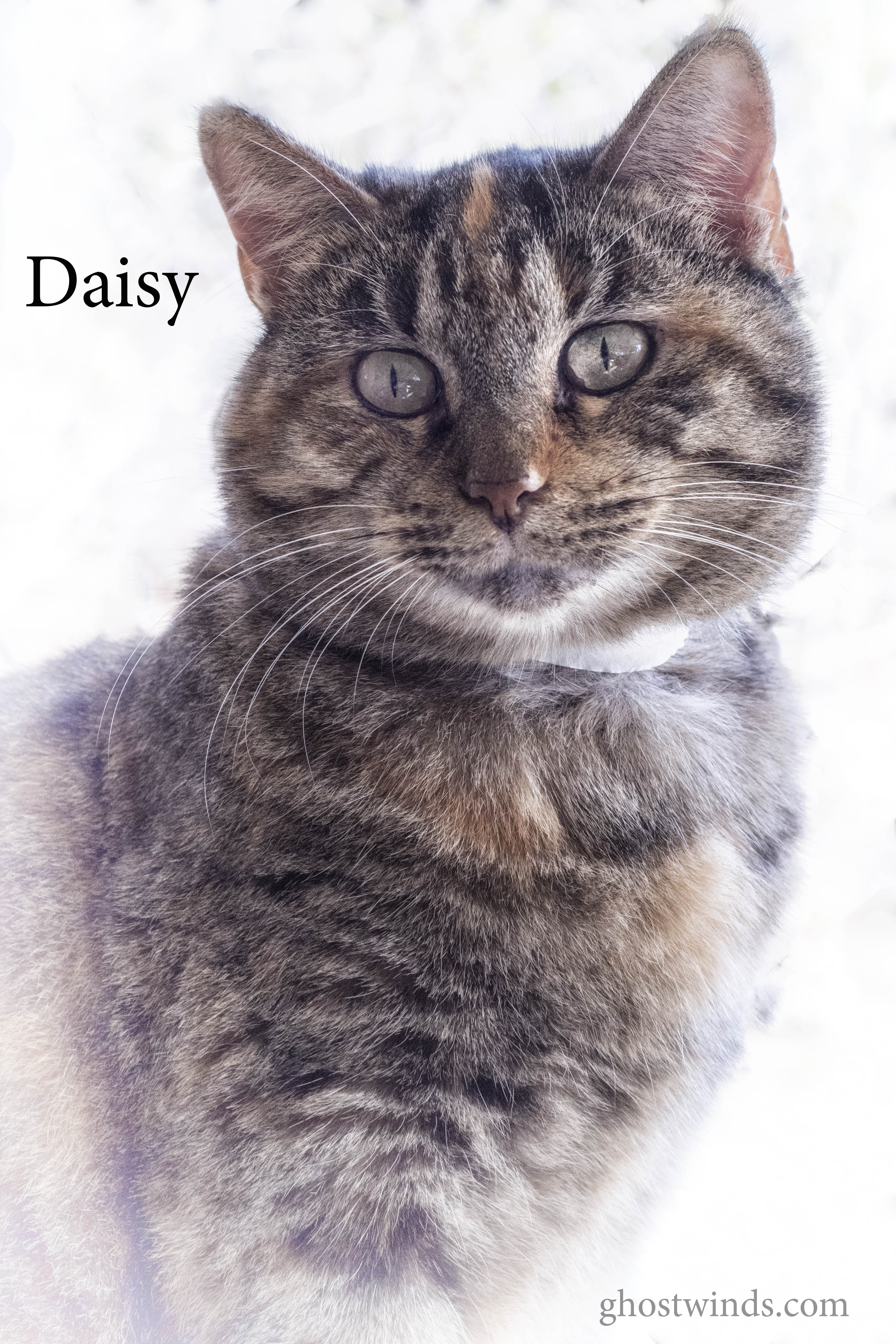 daisy3631