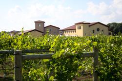 VB-Vineyard View