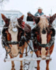 God Jul Horses 2018.jpg