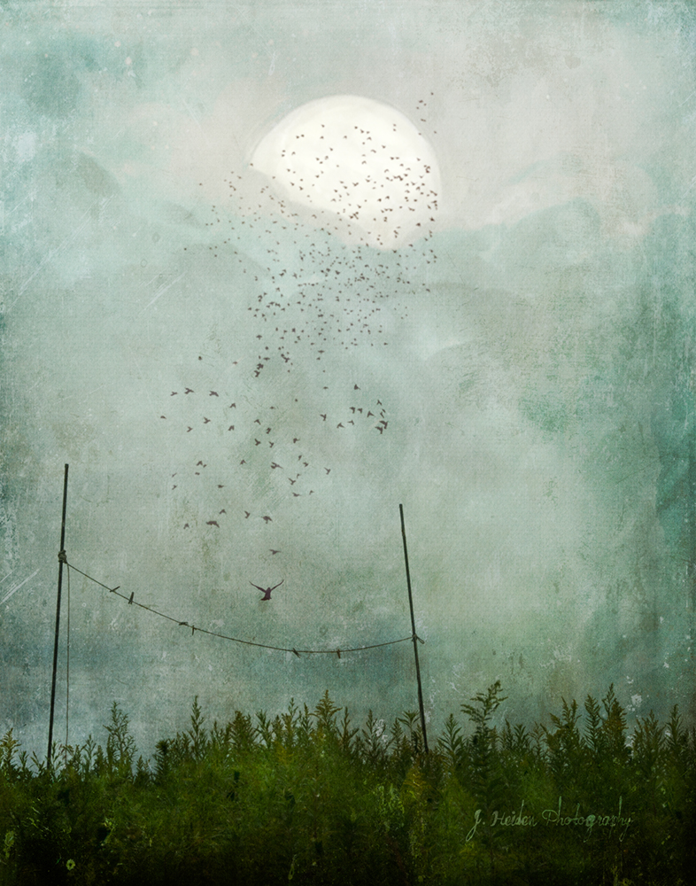 Jamie Heiden Art Fair
