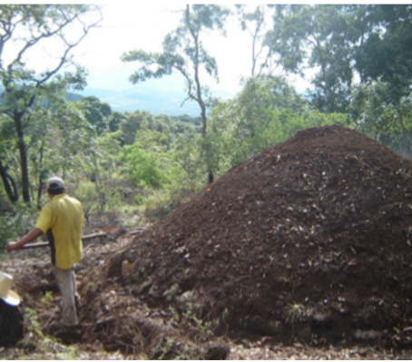 Efectos del ganado en un bosque manejado para la producción de carbón vegetal