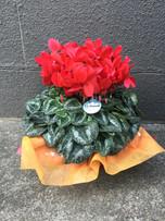 花鉢–10