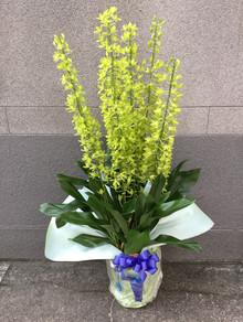 花鉢–14