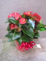 花鉢–18