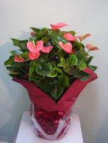 花鉢–20