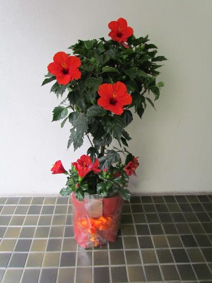 花鉢–16