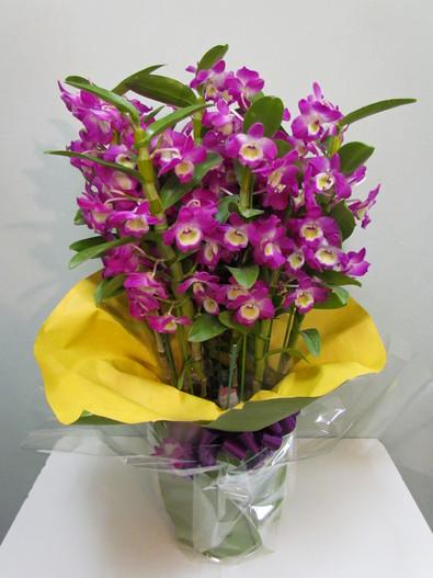 花鉢–13