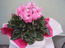 花鉢–25