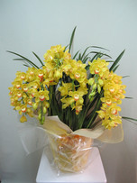 花鉢–17