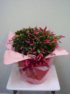 花鉢–23