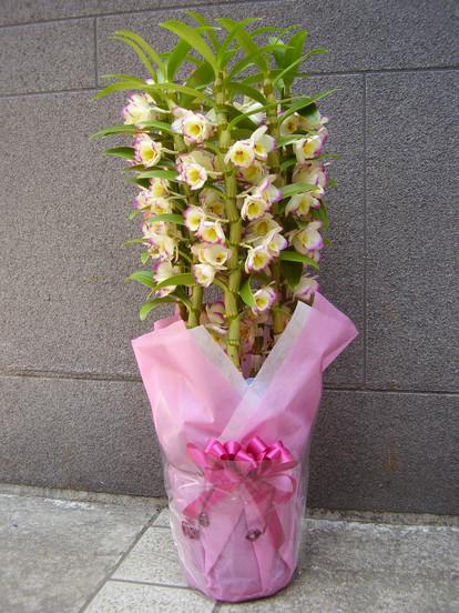 花鉢–19