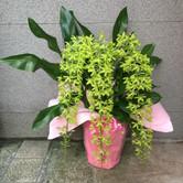 花鉢–15