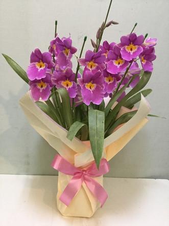 花鉢–27