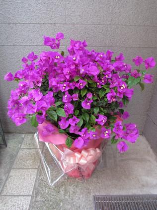 花鉢–12