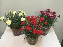 花鉢–26