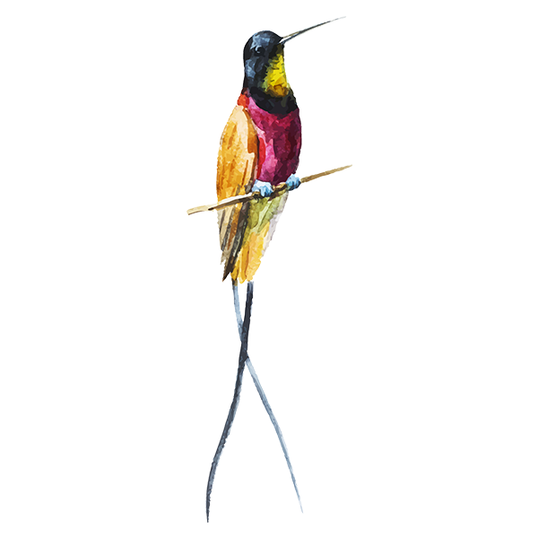 Aquarelle Bird 1