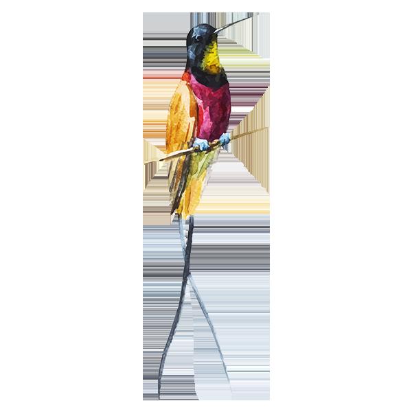 Pájaro de la acuarela 1