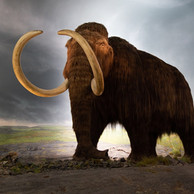 The 6 Stone Age Animals KS2 Students Need to Know