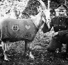 Celebrating Famous Animals of World War I - Information for KS2 and KS3
