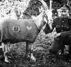 Celebrating Famous Animals of World War I - Information for KS2 and KS3