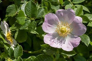 wildflower-4267656__480.jpg