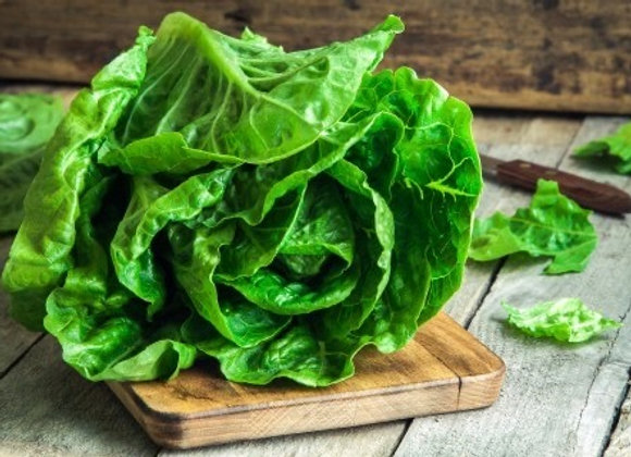 Lettuce (Romaine) Pellets
