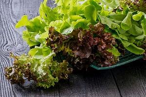 Lettuce%20Lolla%20Rossa_edited.jpg