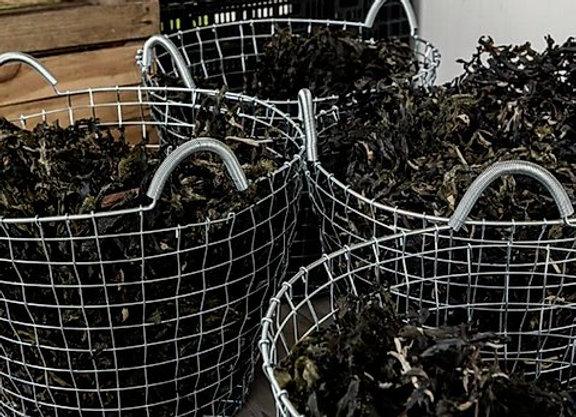 Organic Seaweed Fertiliser Bundle | 8 Pack