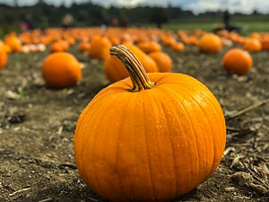 Pumpkin Image.jpg