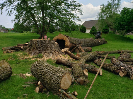 Safe Tree Removal is our Business