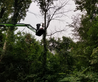 Large Dead Tree Removal